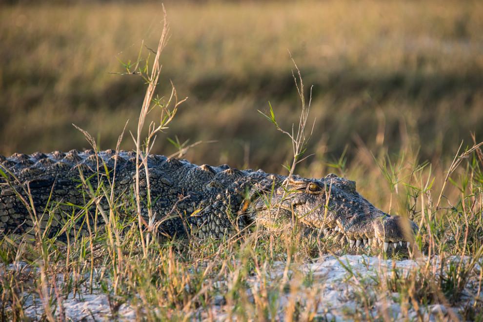 Botswana-2012-15
