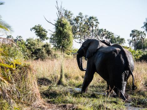 Botswana-2012-5