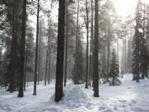 Laponie-JN-3