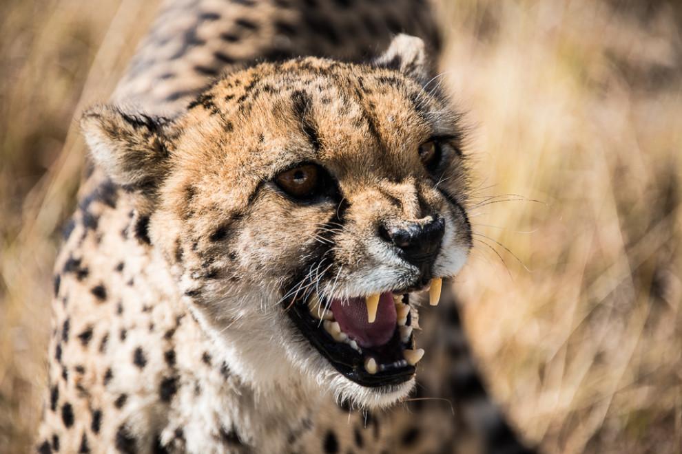 Namibie-2012-1