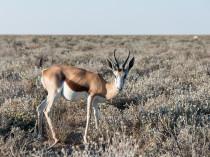 Namibie-2012-3