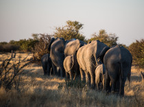 Namibie-2012-4