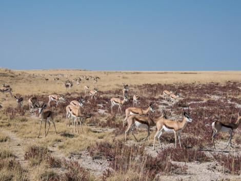 Namibie-2012-5