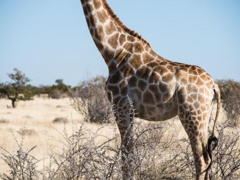 Namibie-2012-6