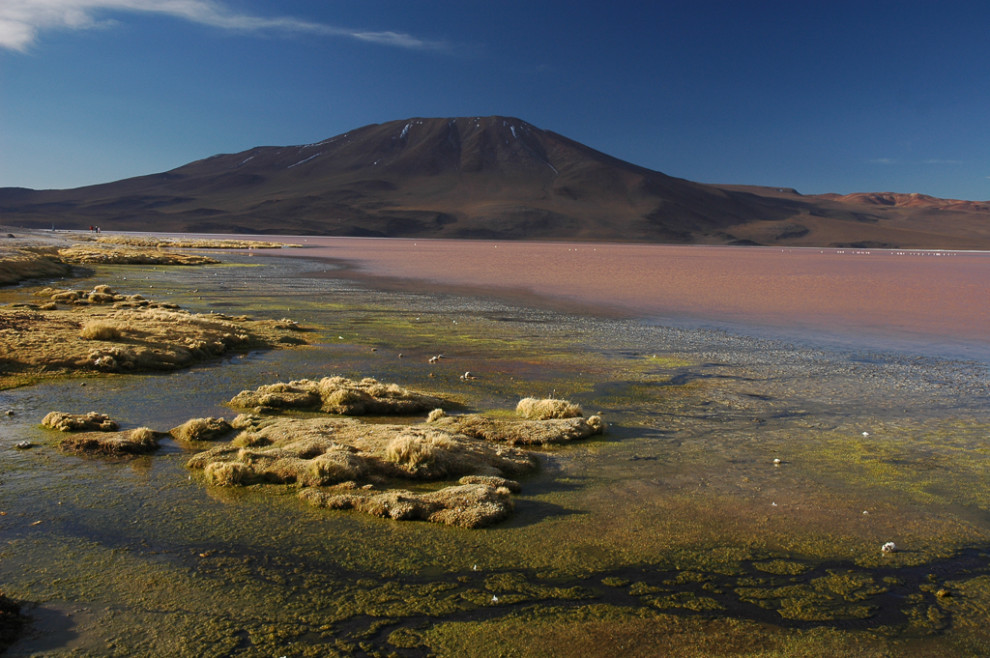 Laguna Colorada - Bolivie