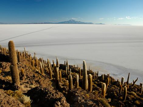 Isla del Pescado salar uyuni bolivie