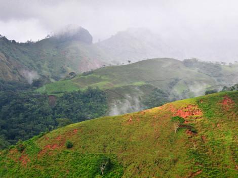 Forêt - Costa Rica