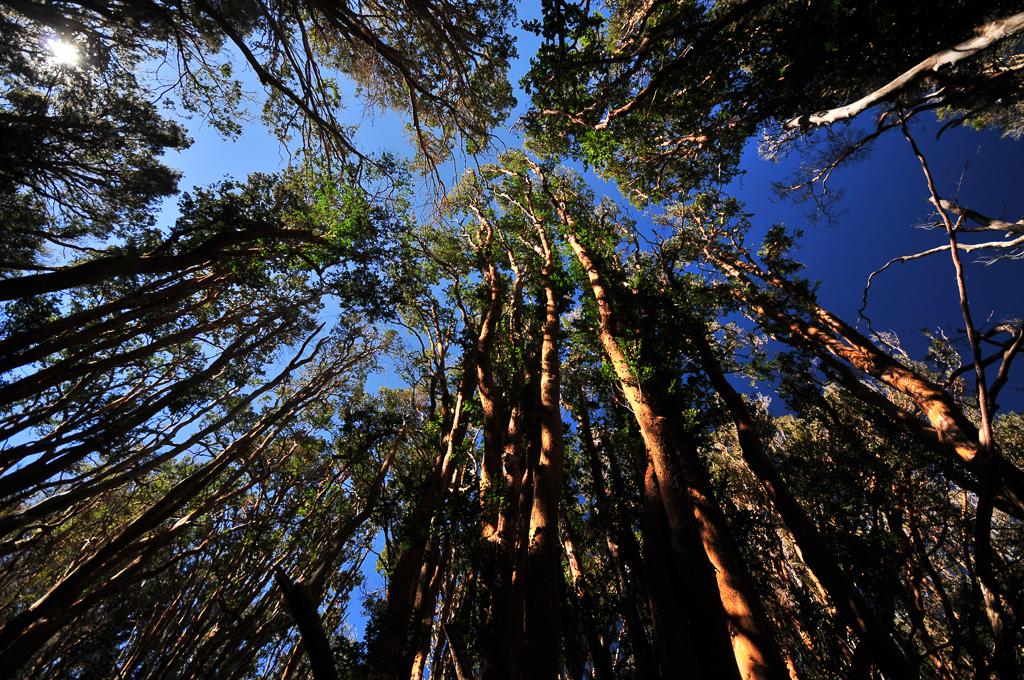 Parc National Los Arrayanes - Province de Neuquen (Argentine)