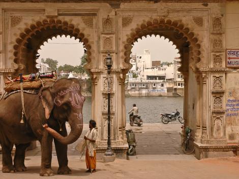 Eléphant à Jaipur - Inde