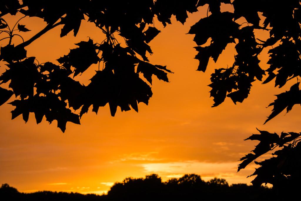 Coucher de soleil - Berchères-sur-Vesgre 3