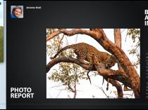 Léopard au Botswana dans TRVL Magazine