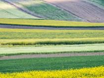 Champs de colza au printemps à Rouvres