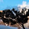 Kilimandjaro – Haiku