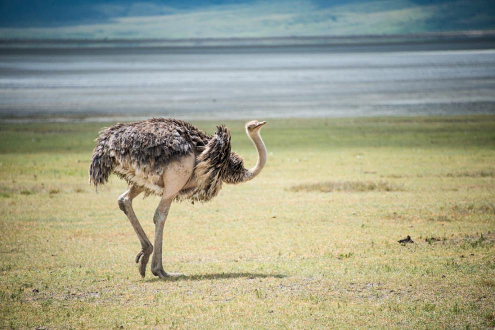 Tanzanie-Ngorongoro-JN-10