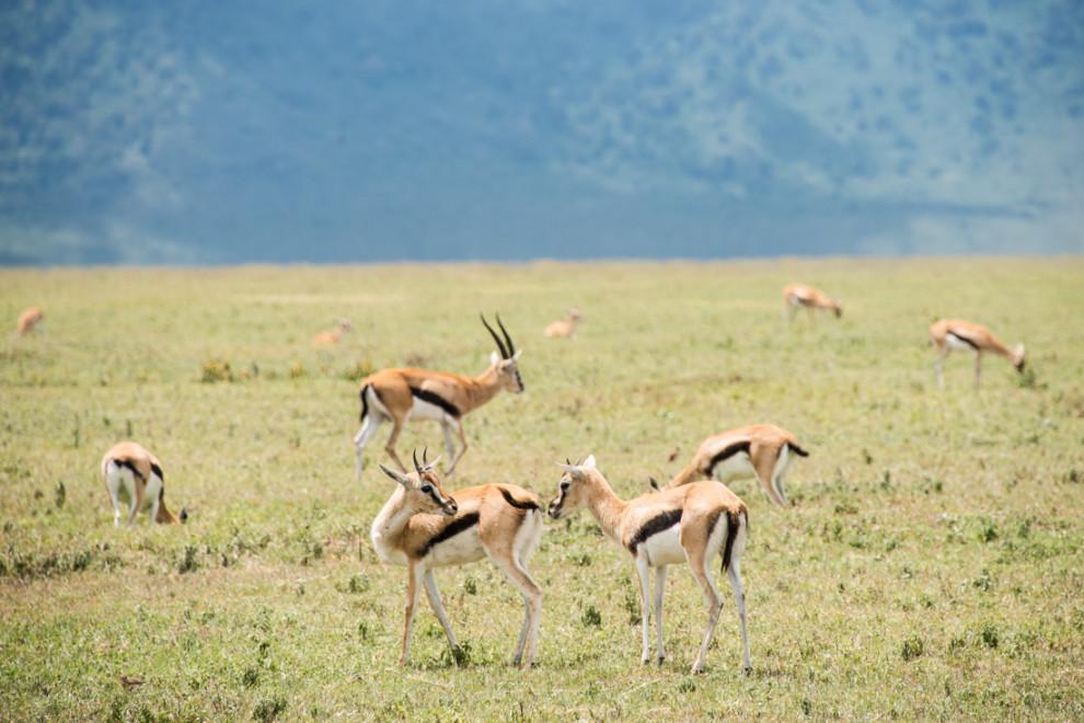 Tanzanie-Ngorongoro-JN-13