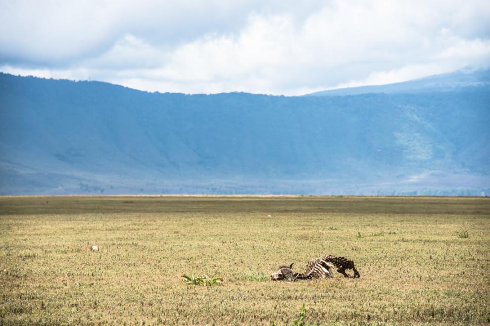 Tanzanie-Ngorongoro-JN-14