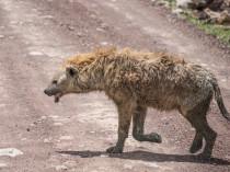 Tanzanie-Ngorongoro-JN-15