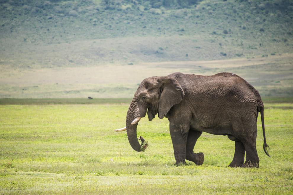 Tanzanie-Ngorongoro-JN-17