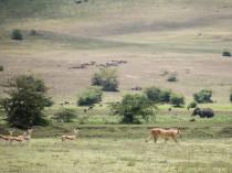 Tanzanie-Ngorongoro-JN-18