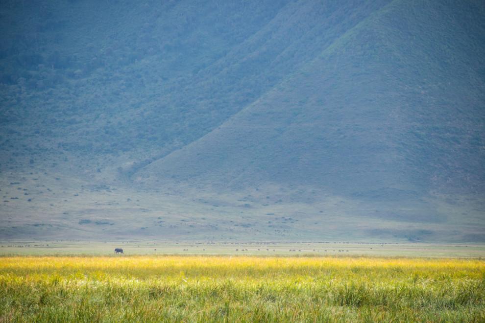 Tanzanie-Ngorongoro-JN-19