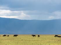 Tanzanie-Ngorongoro-JN-22