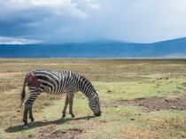 Tanzanie-Ngorongoro-JN-23