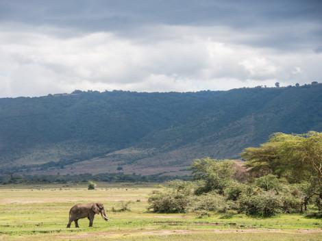 Tanzanie-Ngorongoro-JN-24