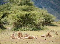 Tanzanie-Ngorongoro-JN-25