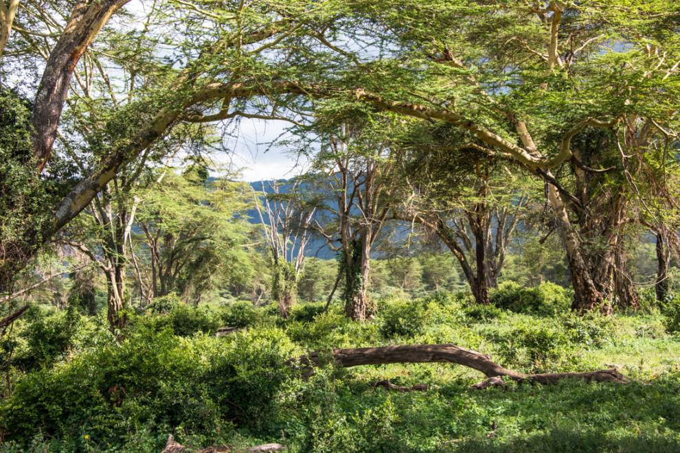 Tanzanie-Ngorongoro-JN-26
