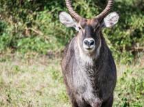 Tanzanie-Ngorongoro-JN-27