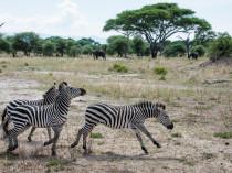Tanzanie-Ngorongoro-JN-3