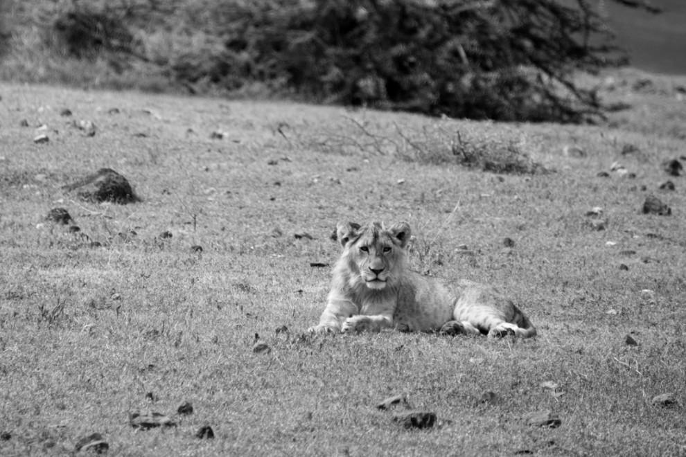 Tanzanie-Ngorongoro-JN-30