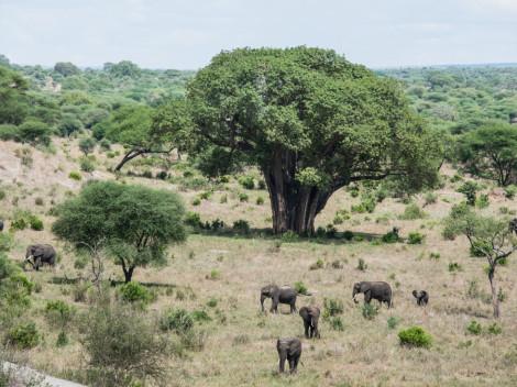 Tanzanie-Ngorongoro-JN-4