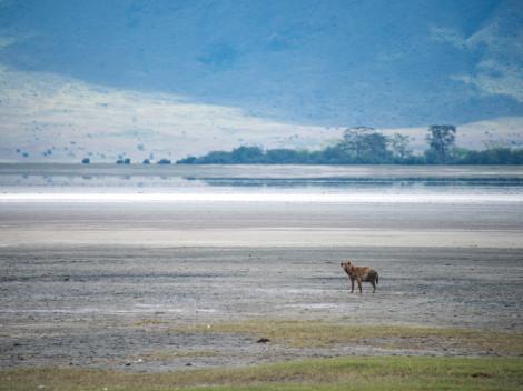 Tanzanie-Ngorongoro-JN-9